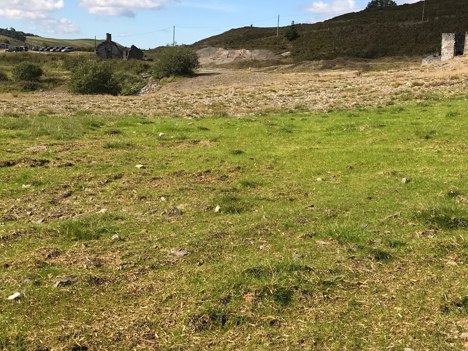 Frongoch Trials TerrAffix 2018 grassed up 22 days after seeding