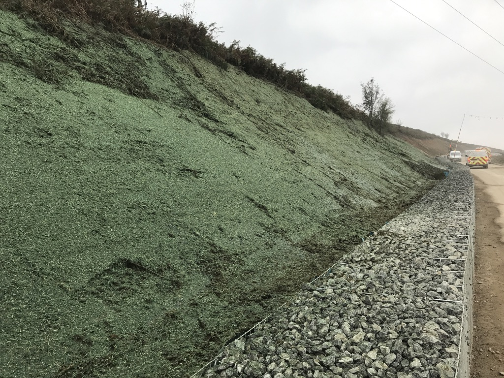 Steep verge after hydroseeding