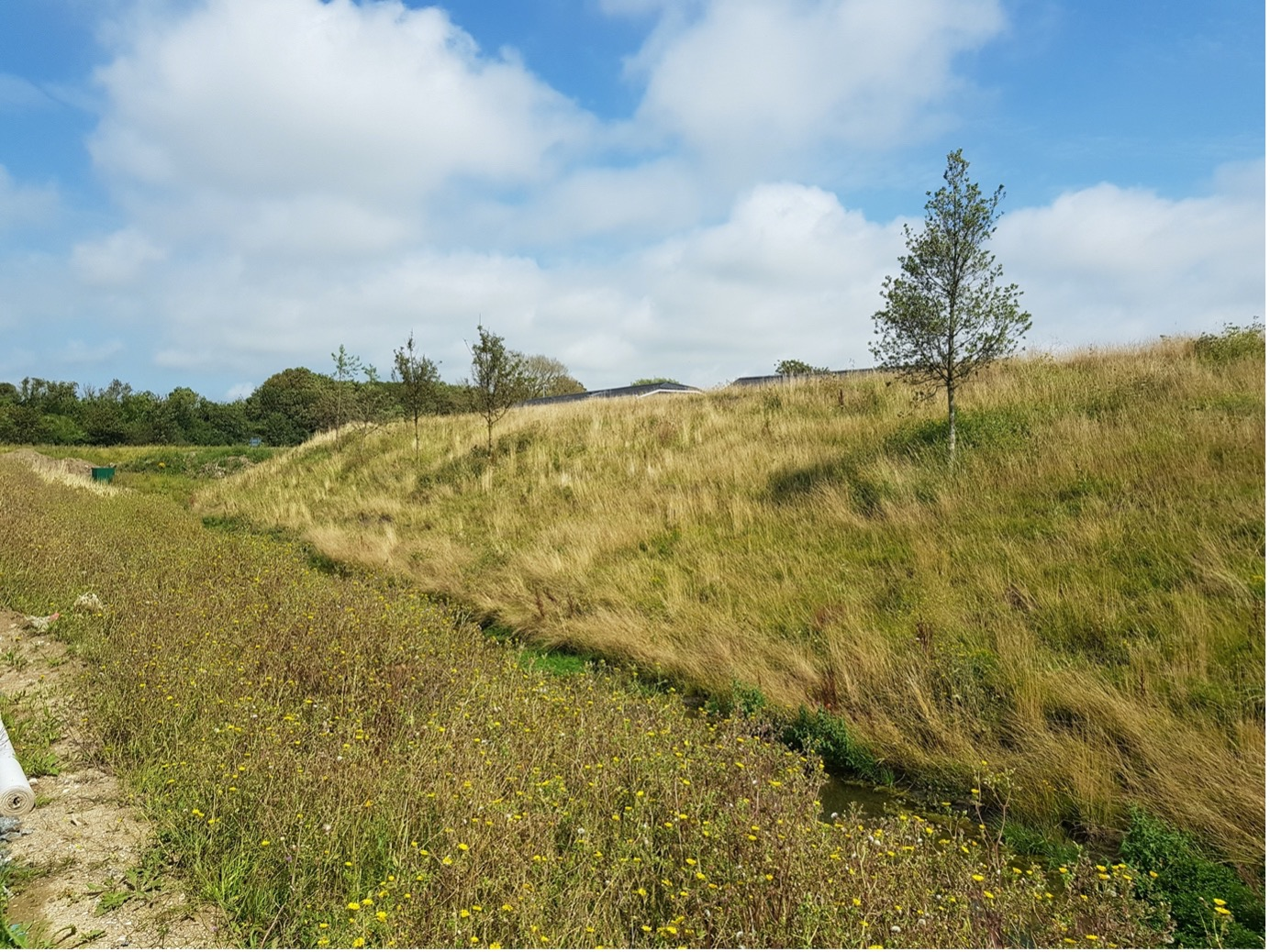 Embankment following treatment with additional landscape tree planting