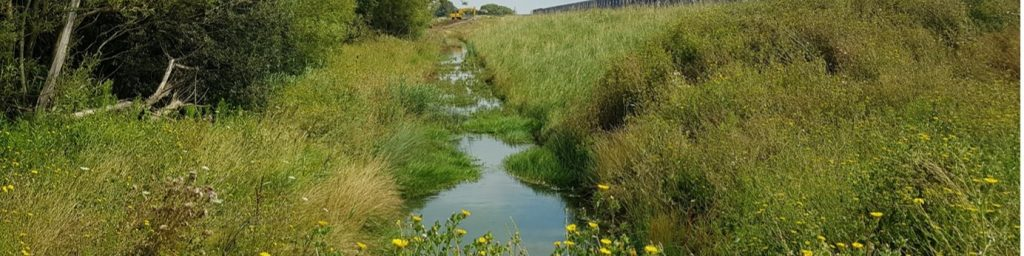 Naturalisation of embankment occuring